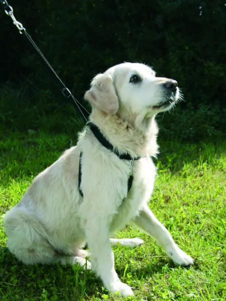 Hundegeschirr Maxi Leader mit Achselschoner