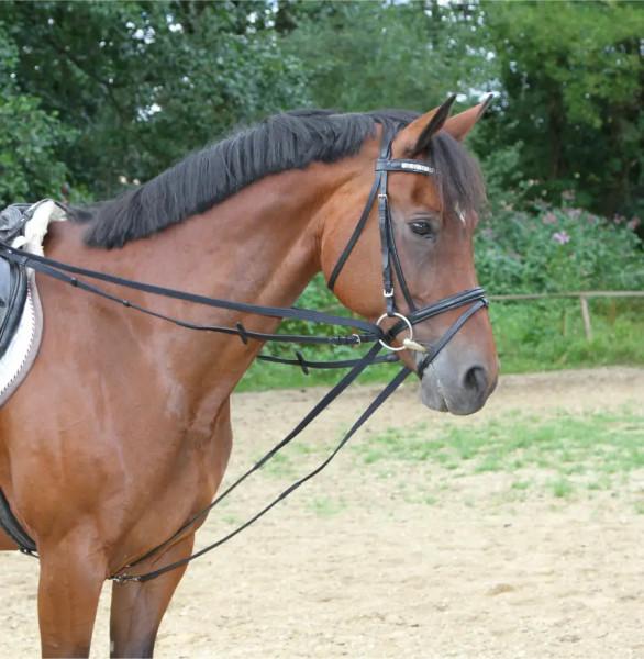 Gurt-Schlaufzügel zur Ausbildung des Pferdes