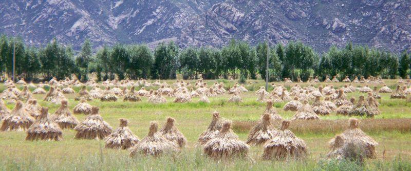 Natur- und Umweltschutz traditionelle Ernte