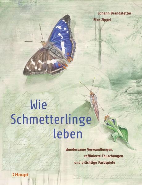 Brandstetter/ Zippel, Wie Schmetterling leben ein Buch mit einmalig schönen Illustrationen und spannenden Texten, Haupt Verlag