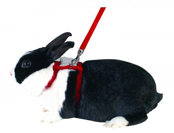 Nagergeschirr für Kaninchen inklusive Leine (140 cm), farblich sortiert