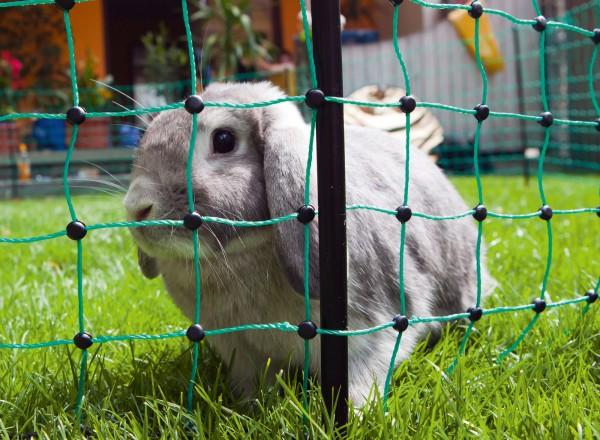 Kaninchennetz elektrifizierbar, Freilauf/ Gehege für Nager, Netz mit engen Maschen