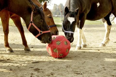 HeuBoy Futterspielball für Pferde, fördert die artgerechte Aufnahme von Rauhfutter