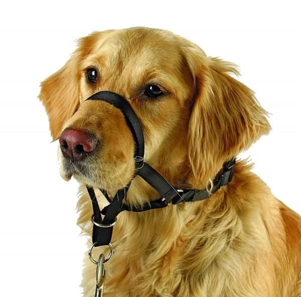 Trainingsgeschirr für Hunde, erleichtert das Führen Ihres Hundes