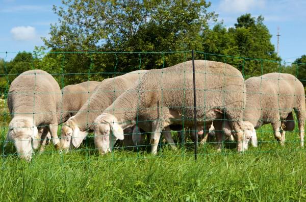 OviNet Schafnetz in grün, universell einsetzbar und ohne Probleme erweiterbar