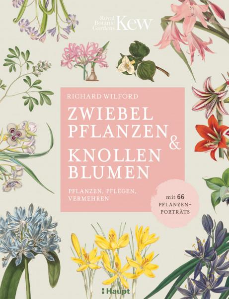 Zwiebelpflanzen & Knollenblumen: pflanzen, pflegen, vermehren - mit 66 Pflanzenporträts, Haupt Verlag, Autor R. Wilford
