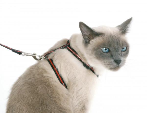 Katzenset 3-teilig, mit Halsband, Geschirr und Leine, 3 Sets