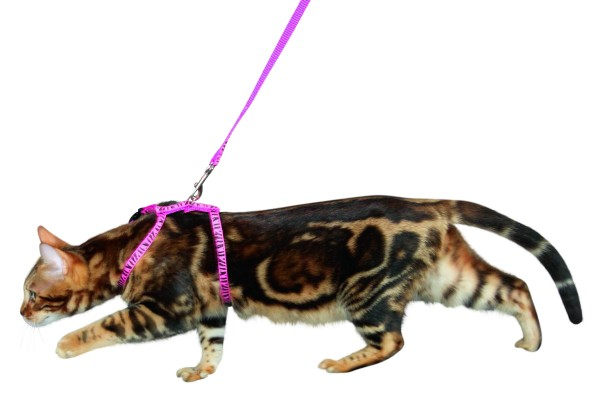 Trendiges Katzengeschirr mit Leine, pink mit Zebra-Druck, 3 Stück