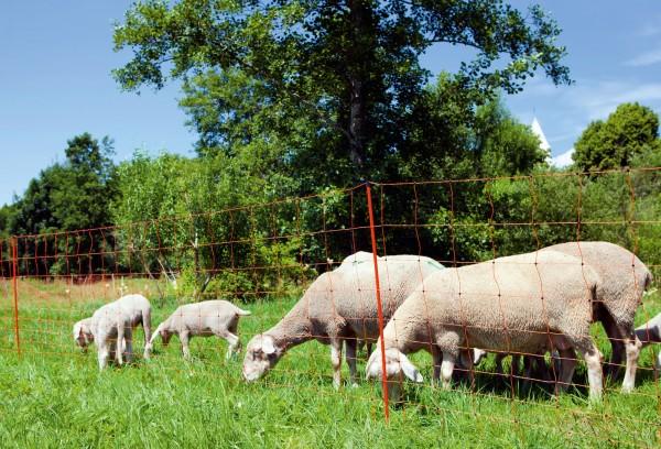 OviNet Schafnetz, elektrifizierbares Netz für den universellen Einsatz