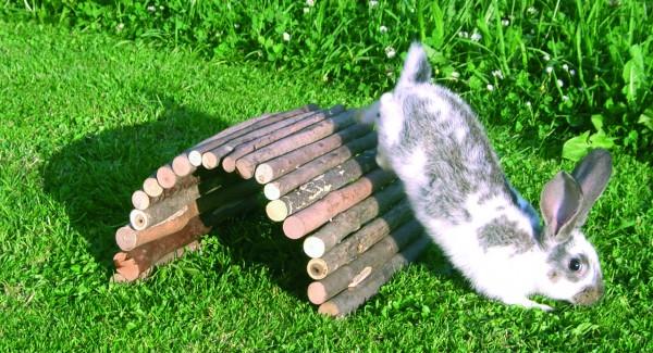 Flexible Brücke aus Naturholz, sorgt für Abwechslung in Käfig und Gehege