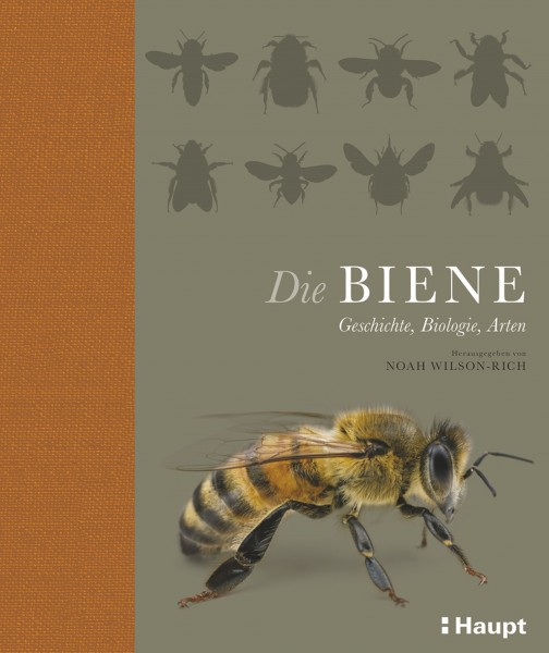 Noah Wilson Rich Die Biene: Geschichte, Biologie, Arten erschienen im Haupt Verlag