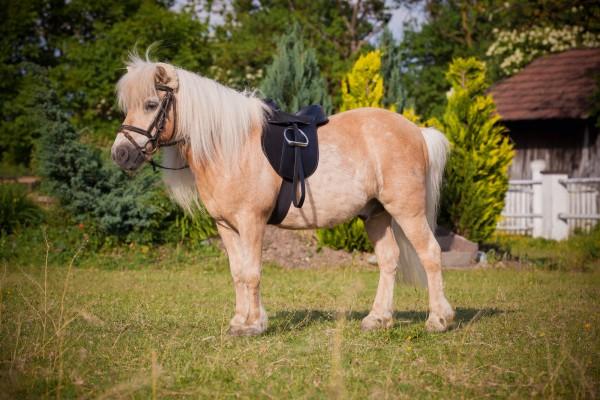Sattelset Pony Economy mit hochwertigem Sattel, Baumwoll-Sattelgurt, Steigbügel und -riemen