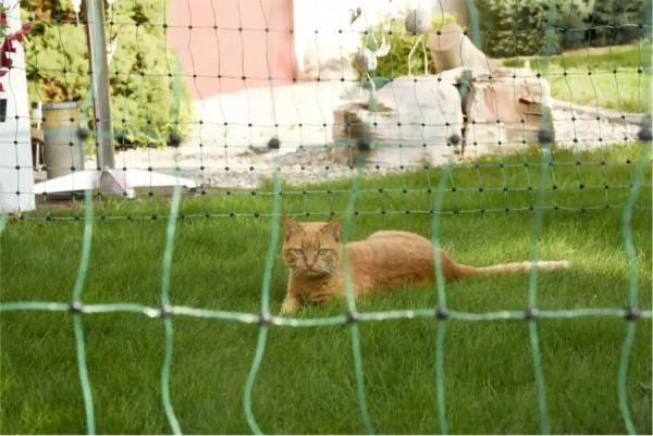 Elektrifizierteres Katzennetz bestens geeignet zum Schutz und zur Hütung Ihres Heimtiers