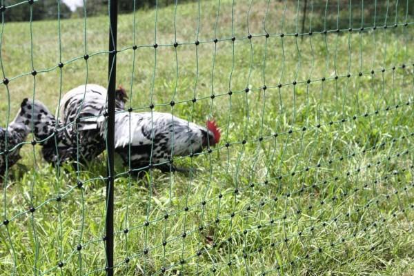 PoultryNet grün, elektrifizierbar, grünes Netz mit Doppelspitze geeignet für Geflügel