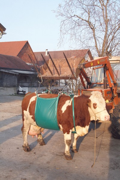 Kuhhebevorrichtung bis 1000 kg für schwache Kühe