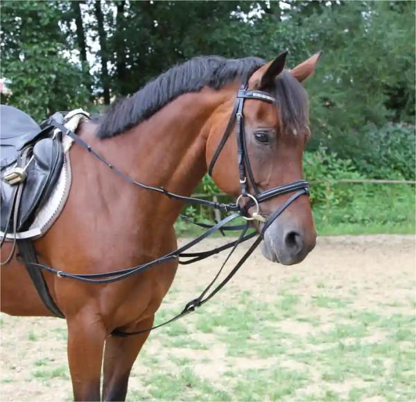 Dreieckzügel (Wiener Zügel), schafft mehr Möglichkeit in der Vorwärts-/Abwärtsbewegung des Pferdes
