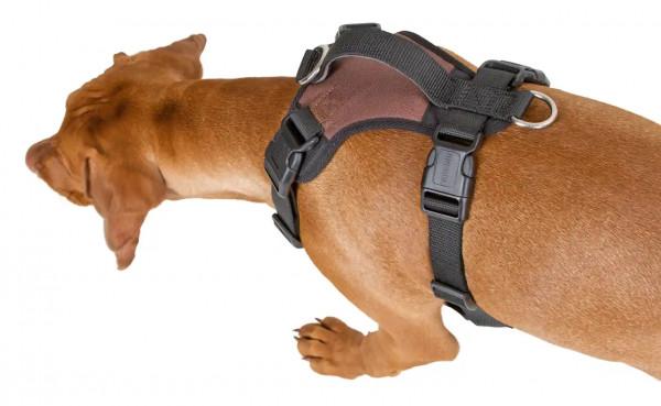 Hundegeschirr Pulsive inklusive Haltegurt