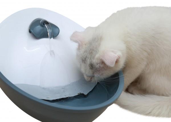 Trinkbrunnen für kleine Hunde und Katzen, versorgt Ihr Tier den ganzen Tag mit frischem, gefiltertem Wasser