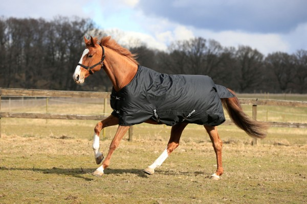 RugBe IceProtect 200, die optimale Decke für ihr Pferd an nasskalten Herbst- und Wintertagen