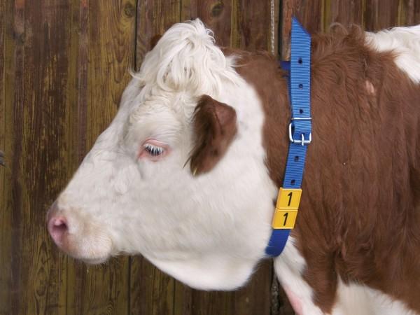 Halsmarkierungsband für Rinder mit Runddornschnalle in der Farbe blau, 4 cm breit